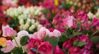 Este 14 de febrero se tendrá garantizado el abasto de rosas mexicanas gracias al incremento que se tiene en la generación de esta flor ornamental, la cual llegó a una […]