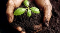 La agricultura es una de las principales fuentes de sostenimiento para las familias que se encuentran en zonas rurales, tanto en términos de provisión de alimentos básicos, como en la […]