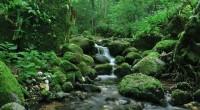 La organización ambientalista The Nature Conservancy (TNC), presentó la «Visión 2030» para Chiapas, ello a laSecretaria de Medio Ambiente e Historia Naturalestatal (SEMAHN), proyecto que se realizó con apoyo de […]