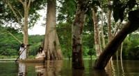 POR: Rafael Cienfuegos Calderón La deforestación para uso agrícola o habitacional implica el agotamiento del suelo y la imposibilidad de recargar los mantos acuíferos que proporcionan nueve de cada 10 […]