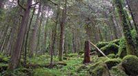 Para revertir las secuelas del cambio climático es conveniente valorar los servicios medioambientales que proporcionan los bosques, al capturar el dióxido de carbono (CO2) y otros gases que degradan el […]