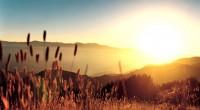 """Aproximadamente a mediados de julio inició en algunos estados de la República Mexicana el periodo conocido como """"Canícula"""", durante el cual las lluvias disminuyen en forma considerable y el calor […]"""