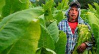 La empresa tabacalera Philip Morris México dio a conocer los avances que registra su Programa Sustenta, iniciativa implementada en el estado de Nayarit en conjunto con Tabacos del Pacífico Norte […]
