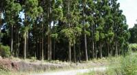 Los bosques albergan el 80 % de las especies del planeta, pese a su importancia cada año perdemos una superficie de 130,000 kilómetros cuadrados en el mundo, un área similar […]