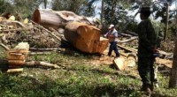 La Procuraduría Federal de Protección al Ambiente (PROFEPA) reforzó sus actividades de inspección por cambio de uso de suelo en terrenos forestalesno autorizados y combate a la tala clandestina en […]