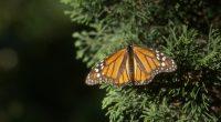 A través de una reforestación de 15 mil plántulas, la Alianza WWF-Fundación Telmex-Telcel, el gobierno estatal y las comunidades de Ocampo, en el estado de Michoacán mantienen continuidad en la […]