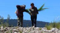 Un grupo de 11 niñas y niños originarios del municipio de Calpulalpan conforman Los Teporingos, brigada que se encarga de proteger y cuidar los bosques de Tlaxcala. Mary Cruz, Iliana, […]
