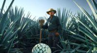 Tequila Patrón, desde sus inicios, ha considerado a todos aquellos involucrados en el método artesanal de elaborar su tequila, como parte de una gran familia. Por esta razón, la empresa […]