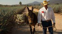 Una vez más el tequila vuelve a llenar de orgullo a México, pues en esta ocasión se ha hecho acreedor a la figura de Marca de Certificación en Singapur, una […]