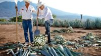 El tequila es uno de los destilados más consumidos a nivel mundial, la bebida referente mexicana en el mundo y lo más importante, es 100% tapatío. Además de ser una […]