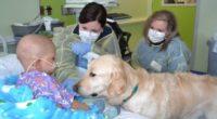 El amor incondicional que un canino muestra a los humanos y en especial a los menores de edad puede ser un elemento de gran aliciente para enfrentar una enfermedad. Ya […]