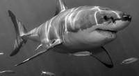 Con el objetivo de mantener la sustentabilidad de las especies y proteger nuestros recursos naturales, la SAGARPA, a través de CONAPESCA, realiza acciones permanentes en los litorales nacionales. Del 1 […]