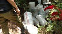La Procuraduría Federal de Protección al Ambiente (PROFEPA) aseguró de manera precautoria 300 kilogramos de tierra de monte, en el municipio de Mineral del Chico, Hidalgo, debido a que su […]