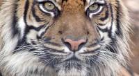 """El próximo 5 de junio, la República de India será anfitriona, por primera vez, de la celebración del Día Mundial del Medio Ambiente 2011, bajo el lema """"Bosques: Naturaleza a […]"""