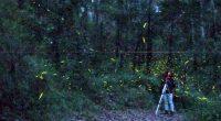 Enviada: Mariana Elisa Cerqueda Segundo Tlaxcala, Tlax.- Visitar el Santuario de las Luciérnagas es una experiencia inolvidable; ahí quizá no se pueda capturar una foto nítida o clara en medio […]