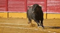 Readacción: Ana Herrera El Ayuntamiento de Córdoba ha aprobado una moción sobre la prohibición de espectáculos en los que haya maltrato animal, específicamente en circos y atracciones de feria. Este […]