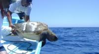 La Comisión Nacional de Áreas Naturales Protegidas (Conanp), dio a conocer que se realizó un estudio a cargo de especialistas de la Universidad Autónoma de Baja California Sur, el Centro […]