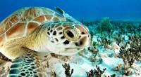 Autoridades de la CONANP y Profepa se reunieron en Tulum, Quintana Roo, con prestadores de servicios turísticos de Akumal para entregar las autorizaciones para nado con tortugas, y de […]