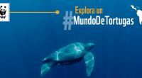 En el marco del Día Mundial de las Tortugas, la organización ambientalista WWF informó que los quelonios como muchas otras especies son objeto de numerosas amenazas y por ello, […]
