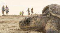 Tortugas, cocodrilos y algunas especies de lagartijas podrían verse afectados por el Cambio Climático actual en el planeta ya que estas especies tienen algo muy peculiar en común: la temperatura […]
