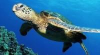 La postergada decisión del gobierno de Estados Unidos de decretar un embargo pesquero contra México, motivado por la mortandad de tortugas caguama en el Golfo de Ulloa, en Baja California […]