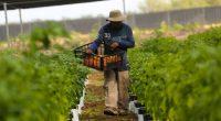 """El secretario de Agricultura, Víctor Villalobos, indicó que el campo mexicano enfrenta grandes retos para aprovechar el intercambio comercial con Estados Unidos y Canadá. """"Nuestro país al día moviliza unos […]"""
