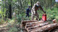 La Comisión Nacional Forestal (CONAFOR) dio a conocer que destinará este año 24.4 millones de pesos a la Ciudad de México para los apoyos que contempla el Programa Nacional Forestal […]