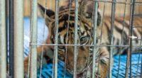 El comercio y la explotación de vida silvestre se ha convertido en un gran negocio y pone en riesgo la salud, las economías y la biodiversidad, afirma la organización internacional […]