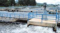 Tratar la totalidad de aguas negras del Valle de México podría lograrse en unos tres años más. La totalidad de aguas negras que se generan en el Valle de México, […]