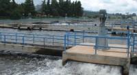Adalberto Noyola Robles, director del Instituto de Ingeniería (II) de la Universidad Nacional Autónoma de México (UNAM), afirmó que en el país sólo el 20 por ciento de las aguas […]