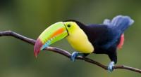 De seguir el ritmo de extinción actual, en menos de cuatro décadas habrá desaparecido más del 60 por ciento de especies que representan la Biodiversidad Mexicana. El saqueo y comercio […]