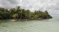 La Comisión Nacional de Áreas Naturales Protegidas (Conanp), a través del Parque Nacional Tulum (PNT) hizo entrega de infraestructura y equipo de salvamento al Ayuntamiento de Tulum para apoyar los […]