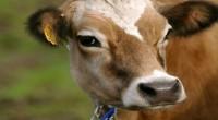 La diversidad genética del ganado es fundamental para poder alimentar a la población en un planeta cada vez más caliente e inhóspito. Preservar la diversidad genética del ganado es fundamental […]