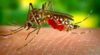 Cada año, el dengue grave cobra la vida de 12,500 personas en México, es decir 2.5 por ciento del medio millón de personas que la padecen a nivel global, según […]