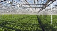 La agricultura y/o horticultura protegida es una técnica que utiliza cubiertas de protección contra las inclemencias del clima y las plagas y enfermedades. Es un sistema que contribuye al incremento […]