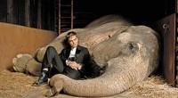 """Escrito por Vania García Gutiérrez Así es como veremos a Robert Pattinson en """"Agua para elefantes"""", mostrándonos otra faceta actoral, muy diferente a como lo hemos visto en """"Crepúsculo"""" con […]"""