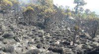 En día de ayer se presentó un incendio forestal en la zona forestal del Ajusco, en donde 70 combatientes de la Comisión Nacional Forestal (CONAFOR), el Gobierno de la Ciudad […]