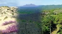 México es uno de los 10 países más diversos del mundo. No sólo alberga más del 10 por ciento de las plantas terrestres y vertebrados del Planeta en un área […]